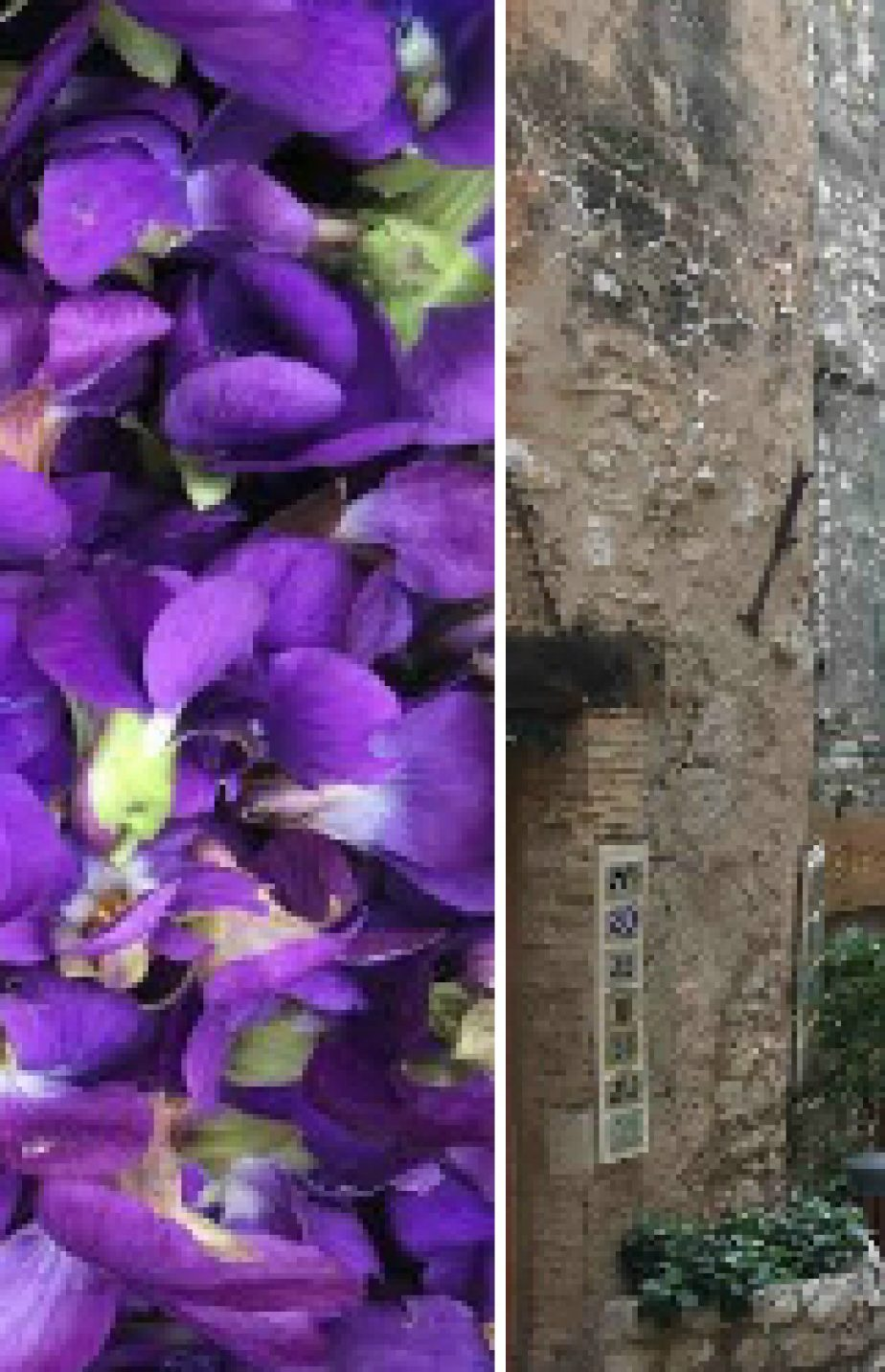 February 2017 – Violets in Tourrettes-sur-Loup and Provencal lunch