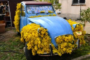 February 2018 Drive through the Mimosa forest, Mimosa fair in Tanneron and a super winter lunch in Auribeau