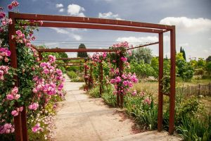 June 2019 – Tour of the International Perfume Museum's Gardens (MIP) in Mouans-Sartoux